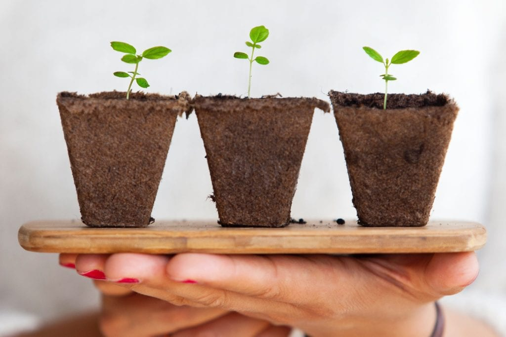 laat je organische resultaten groeien door aandacht